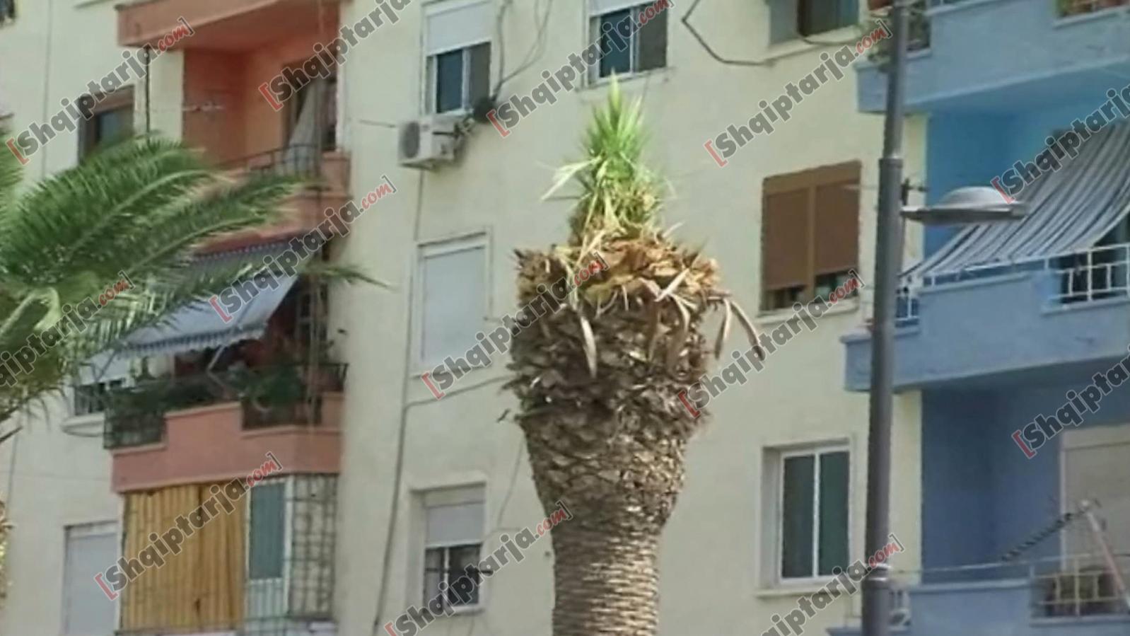 vlora zhvishet nga palmat